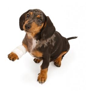 pet sitting, pet sitters, dog walking, dog walkers, Towson, Baltimore